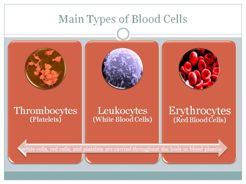 Red Blood Cell Types