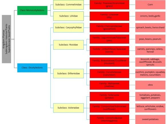 Garden Taxonomy